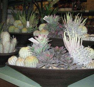 Varities of Succulents