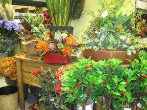 So many varieties of plants & flowers